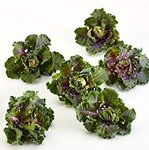 Flower Sprouts, 1kg